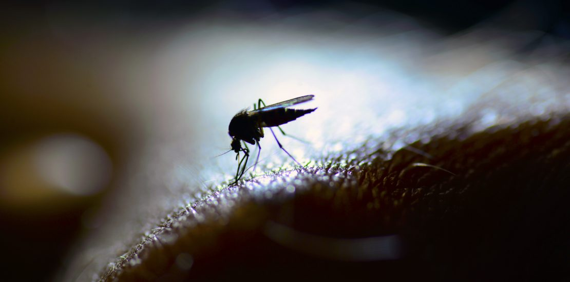 Mosquitoes are more than just pests