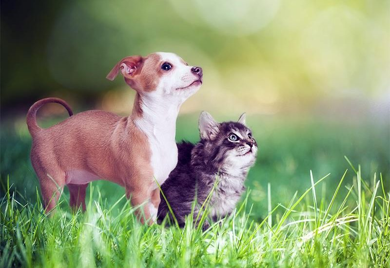 Keep Your Pets Happy, Healthy and Safe