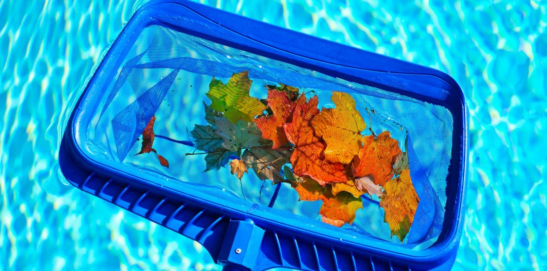 fall leaves in pool scooped