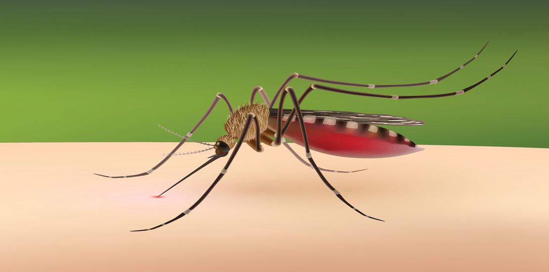 Zika Virus: Protecting Your Family